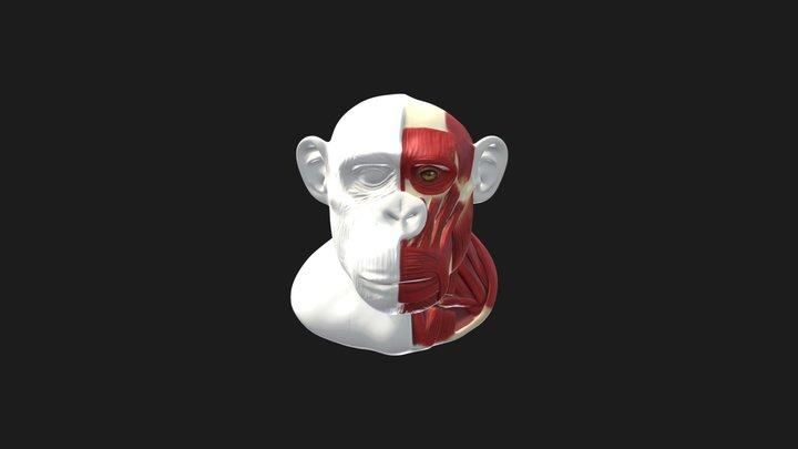 Common Chimpanzee Head & Neck Reconstruction 3D Model