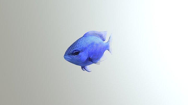 Blue Damselfish 3D Model