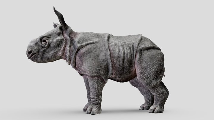 Indian rhino baby. Third of five. 3D Model