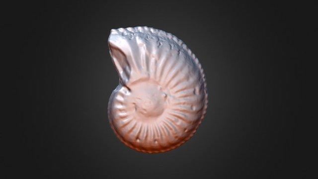 Amaltheus margaritatus 3D Model