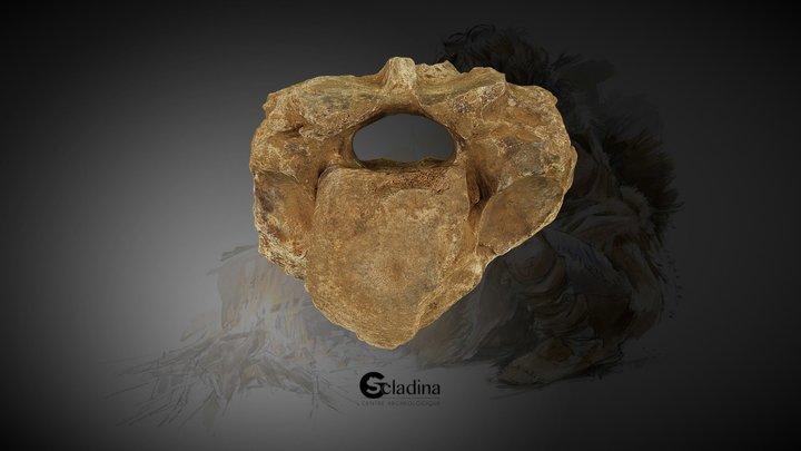 Vertèbre de Rhinoceros laineux 3D Model