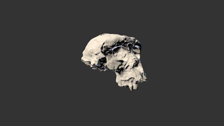 Sahelanthropus Tchadensis 3D Model