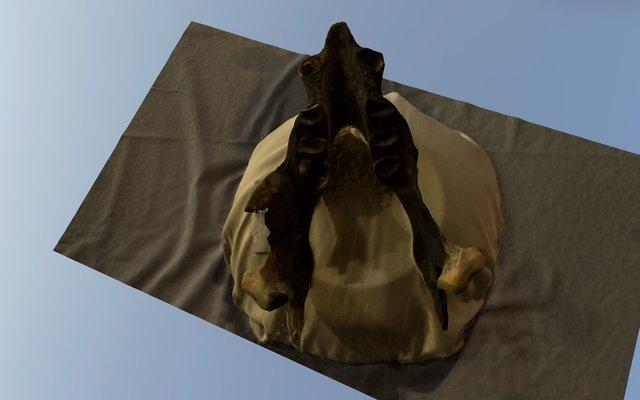 HN Sloth Mandibule 2015 3D Model