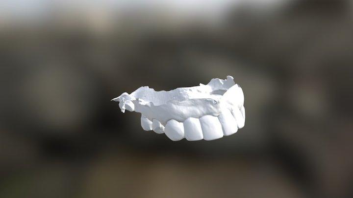 Sue Upper Jaw 3D Model