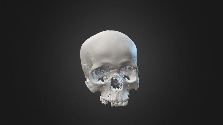 skull 2 3D Model