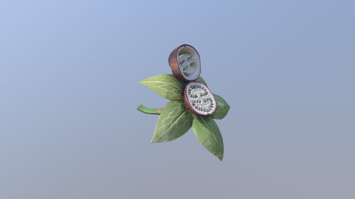 Fruit de la belladone 3D Model