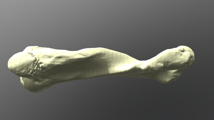 Elephant Humerus 3D Model