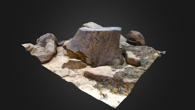 Fossil tree stump, Crail, Fife, UK 3D Model