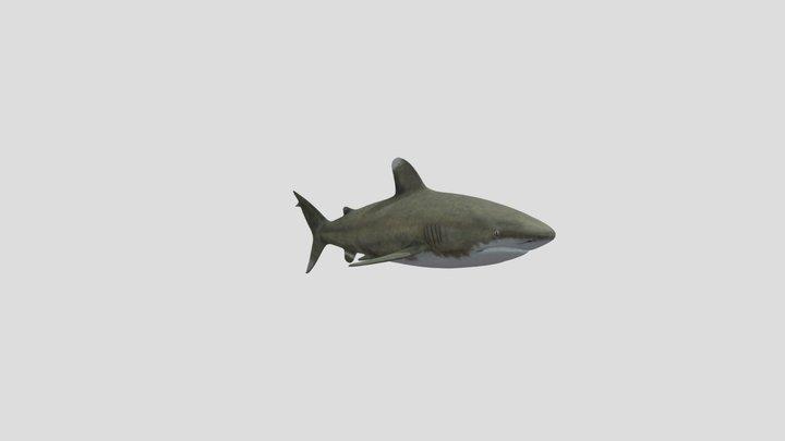 requin de mer 3D Model
