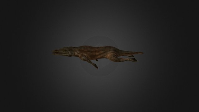 Rodhocetus 3D Model