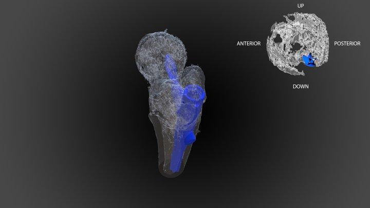ABAJO 3D Model
