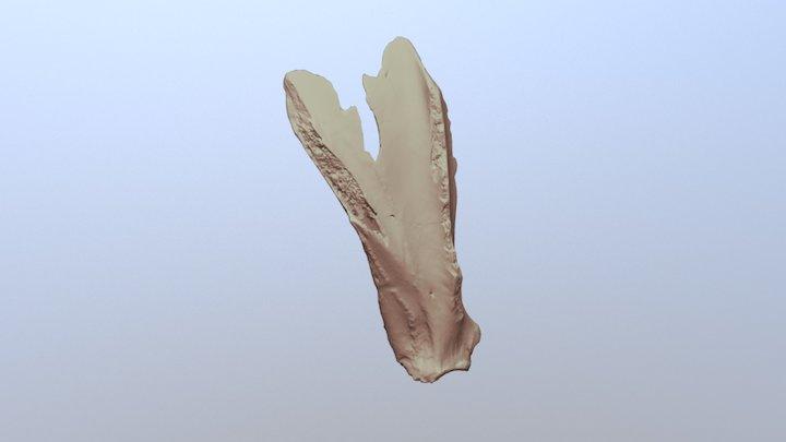 Bison Scapula Hoe 3D Model