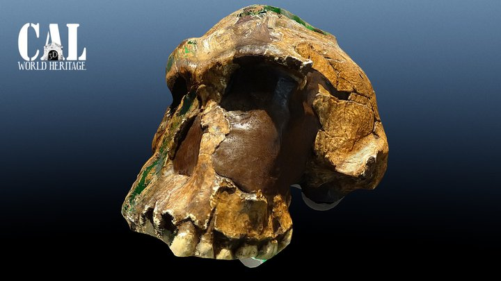 Homo Habilis - Cosmocaixa 3D Model