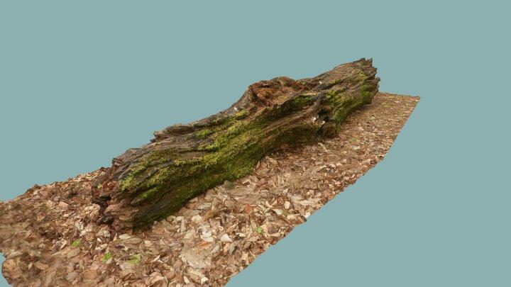 Rotten log 3D Model