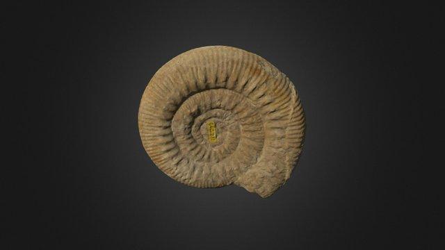 Skirroceras macrum 3D Model