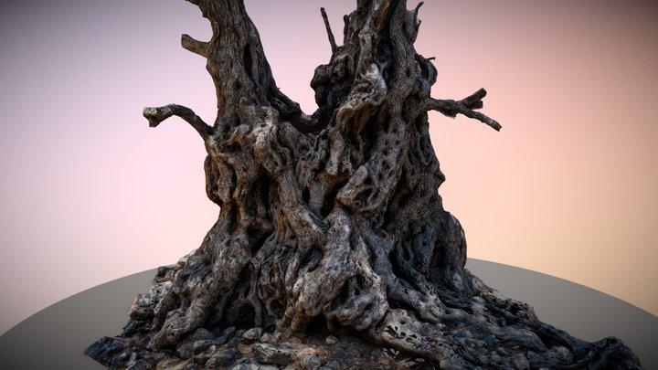 Lissos Ancient Olive Tree 3D Model