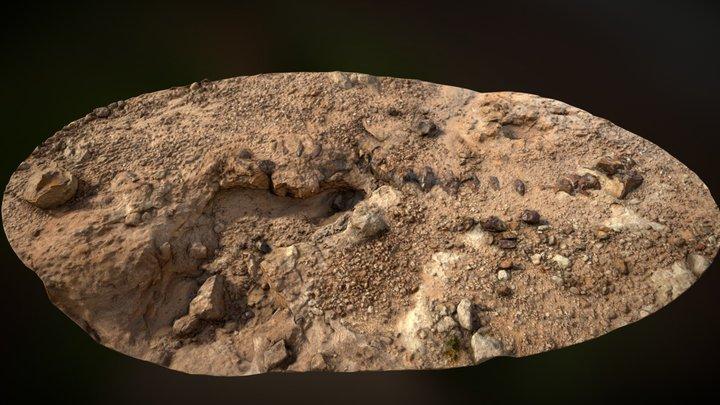 Photogrammetry of Brontosaurus Spine 3D Model