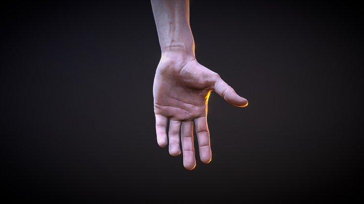FPS Hands (Without Gloves) 3D Model