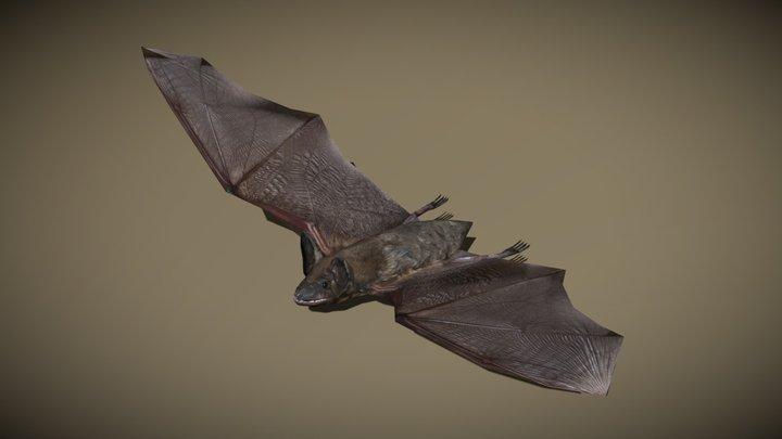 3DRT - birds and critters - bat 3D Model
