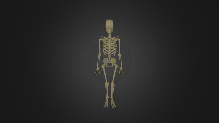 Human Body Skeleton 3D Model