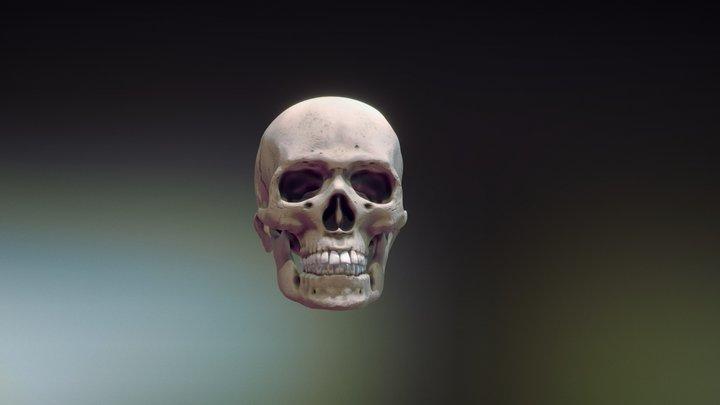 Skull downloadable 3D Model