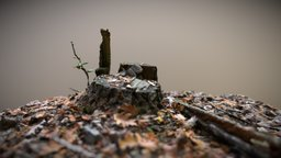 Tree Stump with Autumn Leaves - Photogrammetry 3D Model
