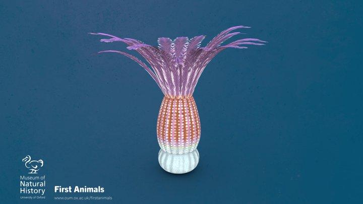 Xianguangia sinica 3D Model