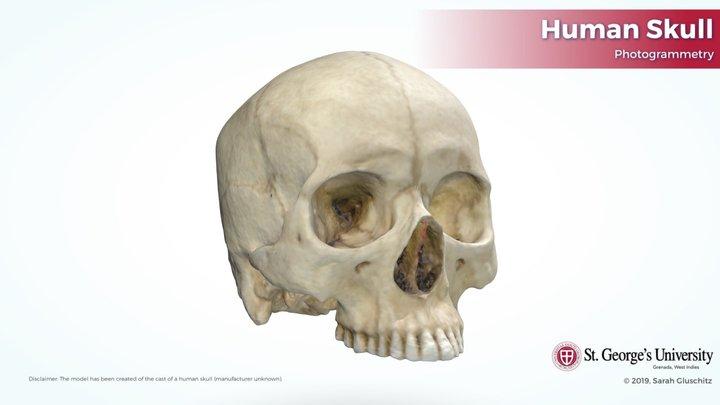Human Skull - minimal post processing 3D Model