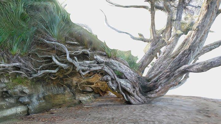 Pohutukawa tree 3 3D Model