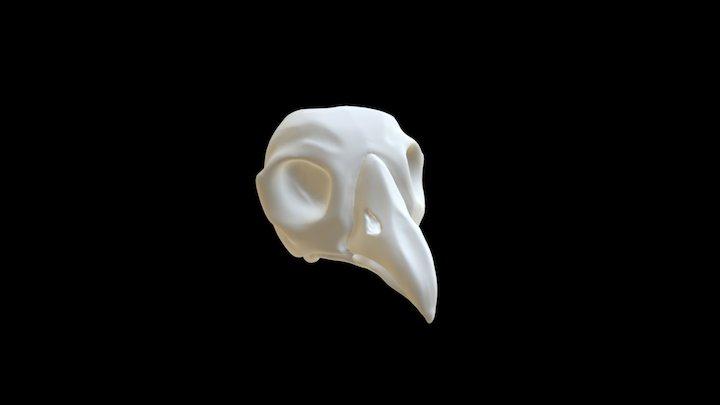 Bird Skull 3D Model