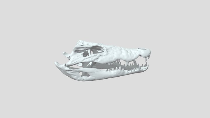 Crocodilo 3D Model