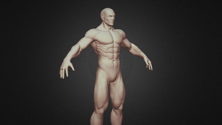 Anatomy study WIP 3D Model