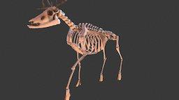 Lowpoly Deer Skeleton 3D Model