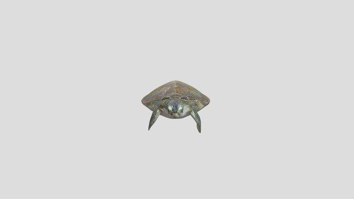 Tortuga verde (Chelonia mydas) 3D Model