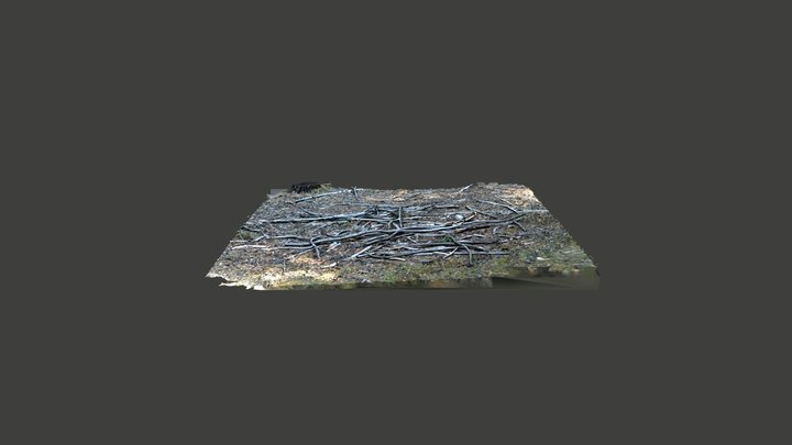 Branches 3D Model