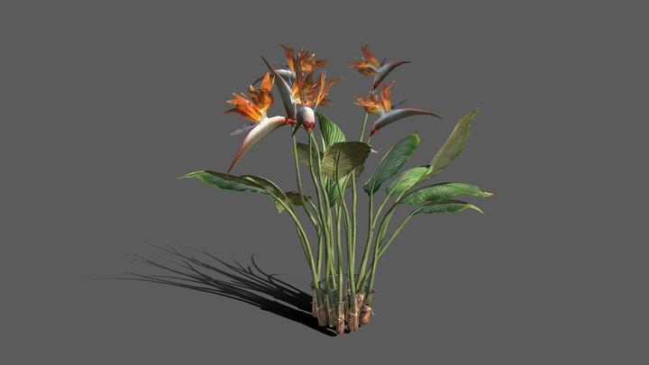 Bird Of Paradise Plant Medium Poly 3D Model