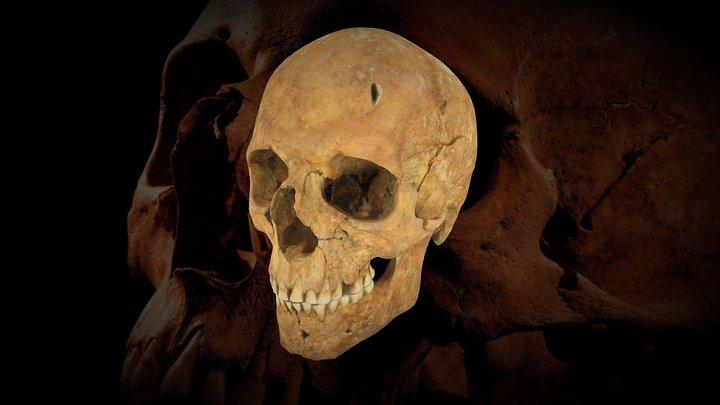 Cráneo s.X dC - Yacimiento de Can Calderó 3D Model