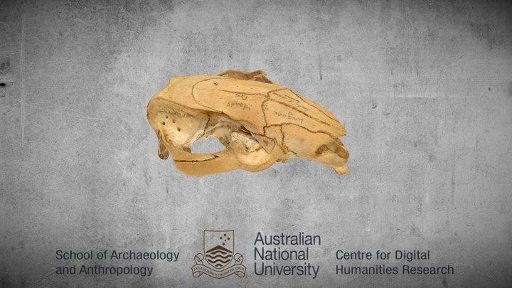 Vombatus ursinus - Wombat 3D Model
