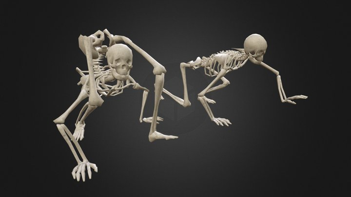Skeleton Poses Pack - 25 unique poses 3D Model