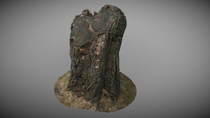 Fatuskó | Tree trunk 3D Model