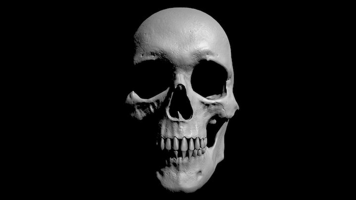 Skull Reference - Light and Shadow 3D Model