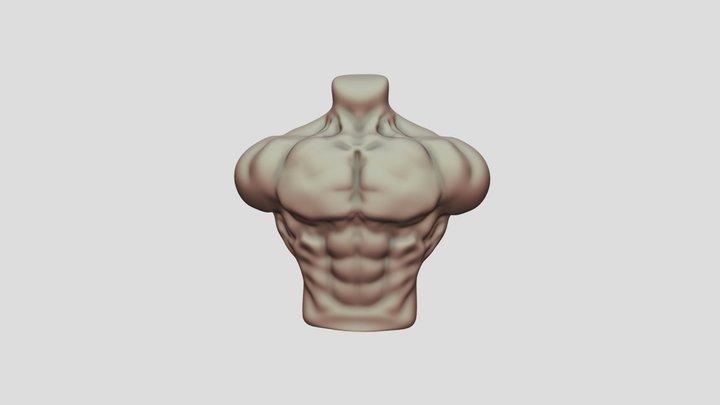 bodybuilder Torso 3D Model