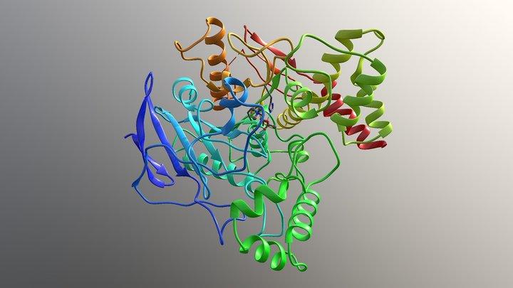 Acetylcholinesterase 3D Model