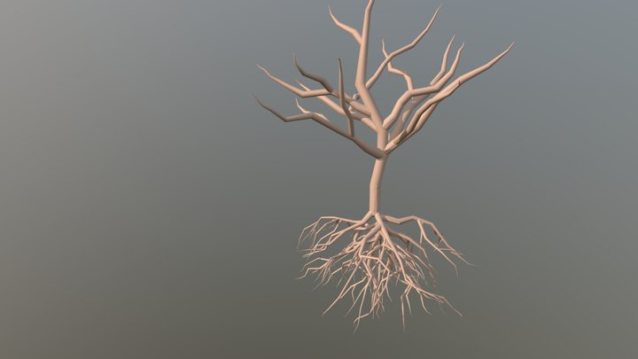 Root System 3D Model
