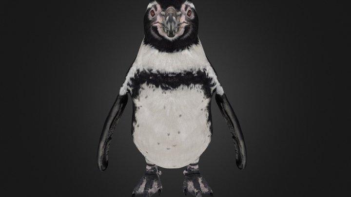 Humboldt Penguin 3D Model