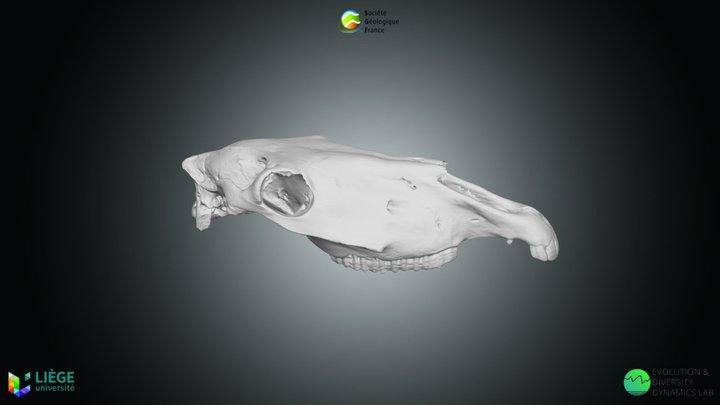 Cheval sauvage, Equus ferus 3D Model