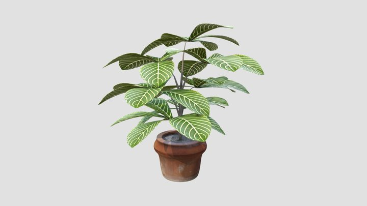 Plant Vase 3D Model