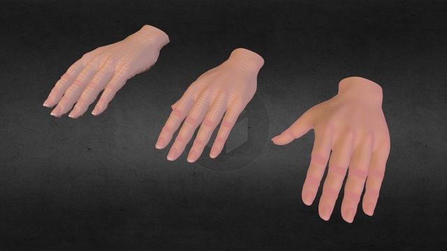 A hand 3D Model