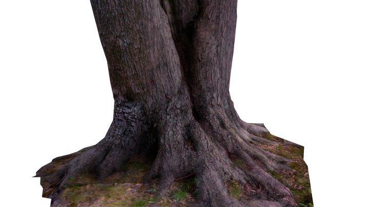 Low Poly Tree Stump 3d Scan 3D Model