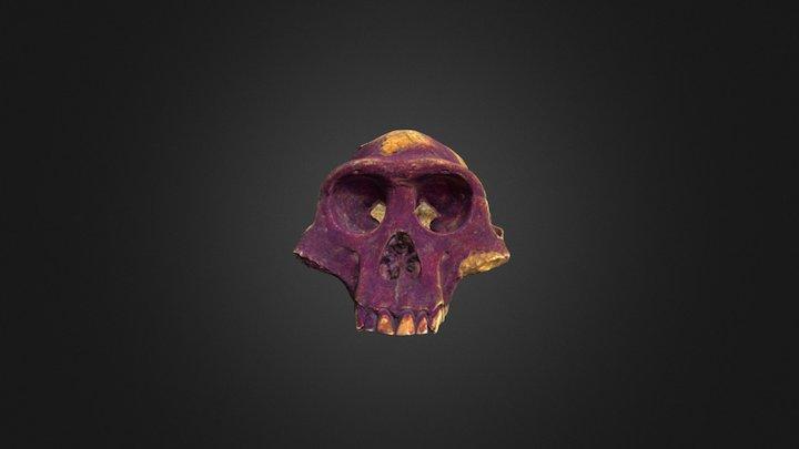 AL 288 cranium 3D Model